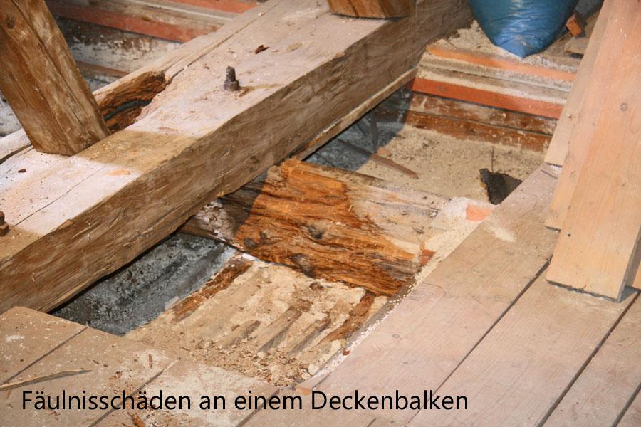 Gut gemocht Holzschädlinge – Pilze › Baugutachter Klaus Schweikl YW18